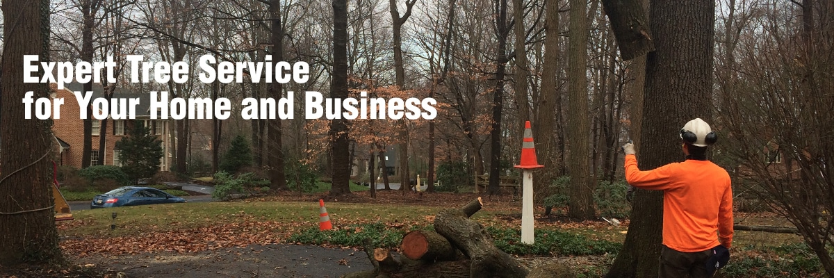 Rubio S Landscaping And Tree Service